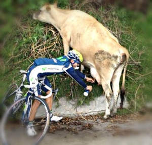 cyclist milking cow 2